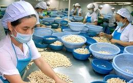 Xuất khẩu điều Việt Nam: Nghịch lý - nhà máy đóng cửa,...